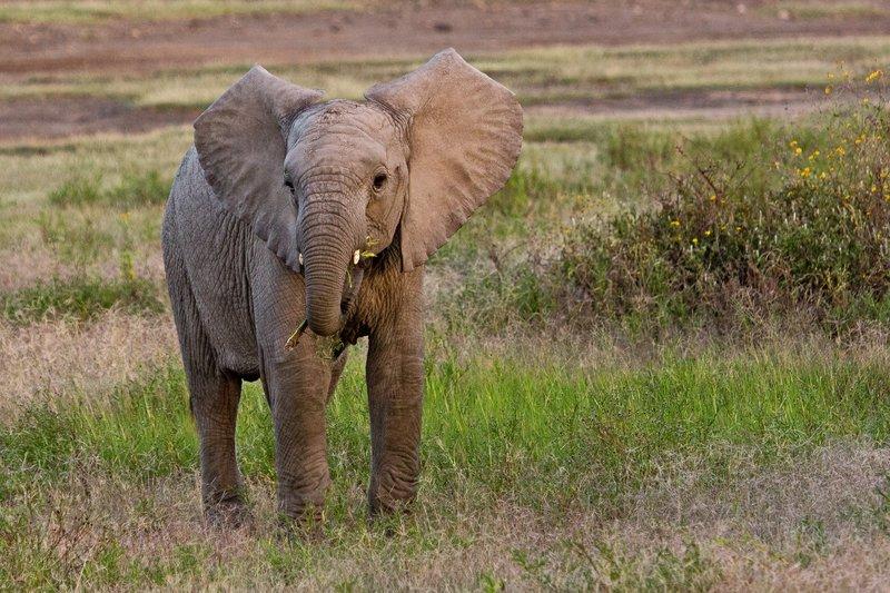 large_Elephants_8-6.jpg