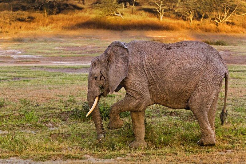 large_Elephants_8-7.jpg