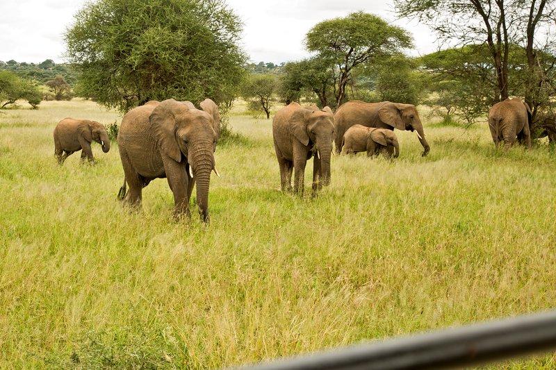 large_Elephants_801.jpg
