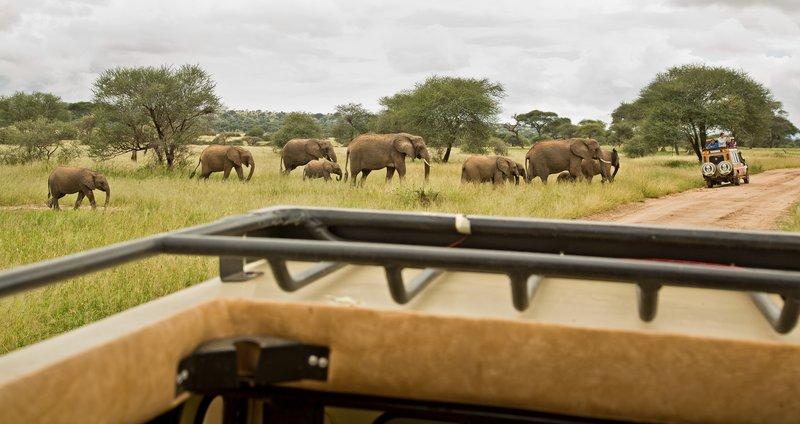 large_Elephants_802.jpg
