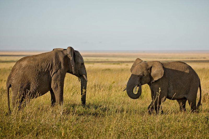 large_Elephants_804.jpg
