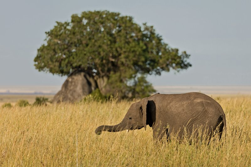large_Elephants_808.jpg