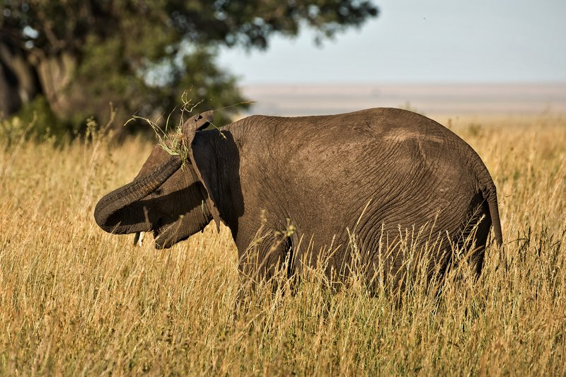 large_Elephants_809.jpg