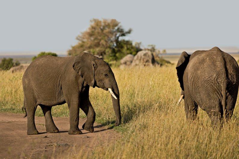 large_Elephants_814.jpg