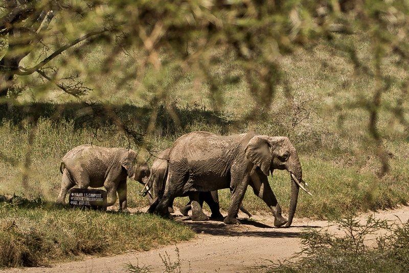 large_Elephants_at_Naabi_Hill_2.jpg