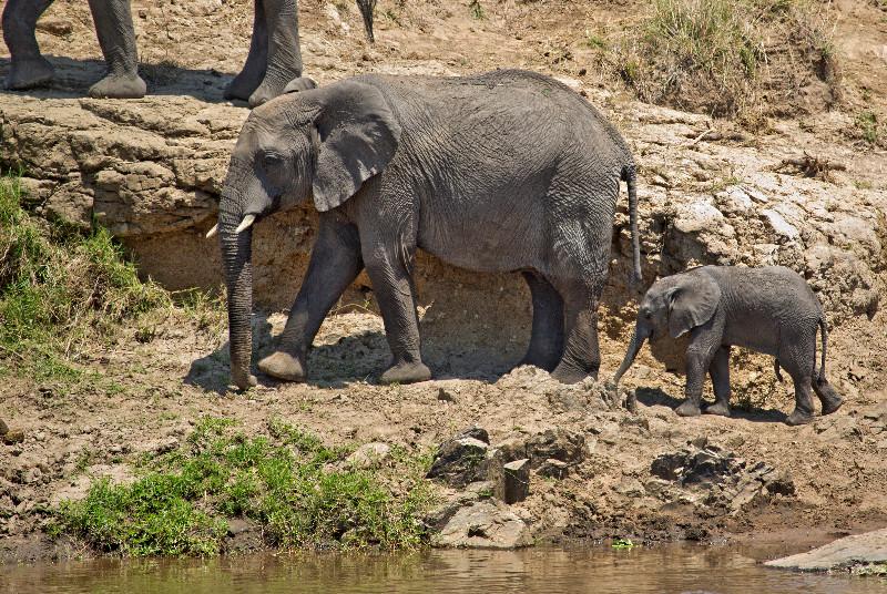 large_Elephants_in_the_Water_3.jpg