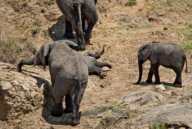 large_Elephants_in_the_Water_5.jpg