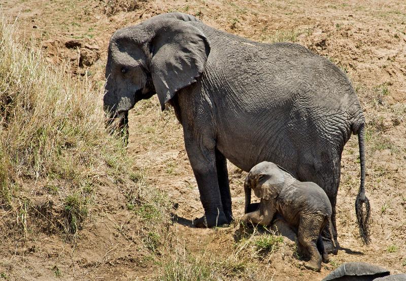 large_Elephants_in_the_Water_6.jpg