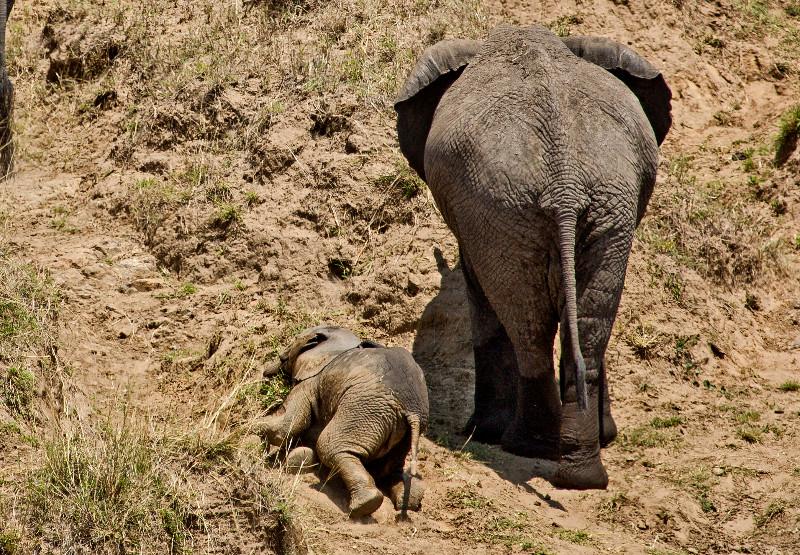 large_Elephants_in_the_Water_7.jpg