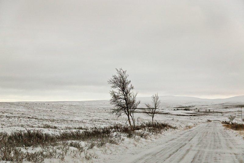 large_Finnmarksvidda_4.jpg