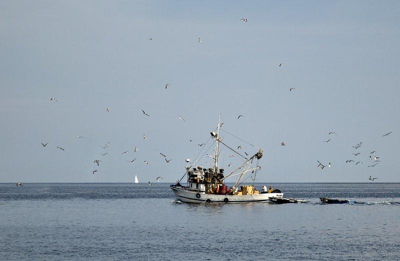 large_Fishing_Trawler_1.jpg