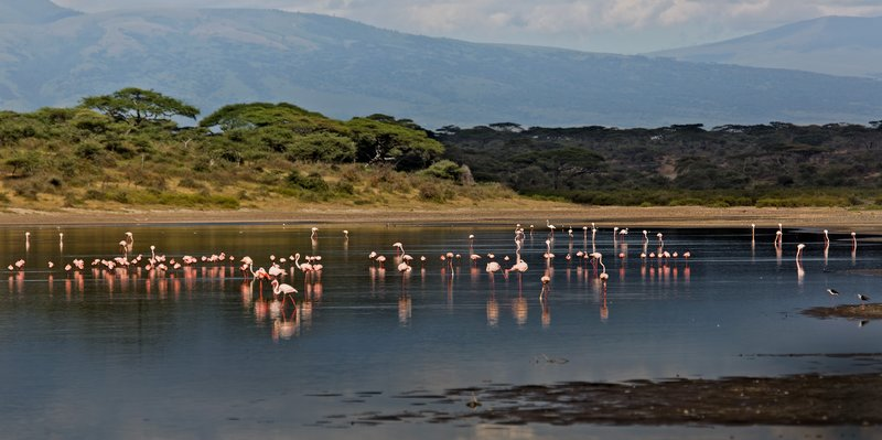 large_Flamingo__.._Ndutu_8-10.jpg