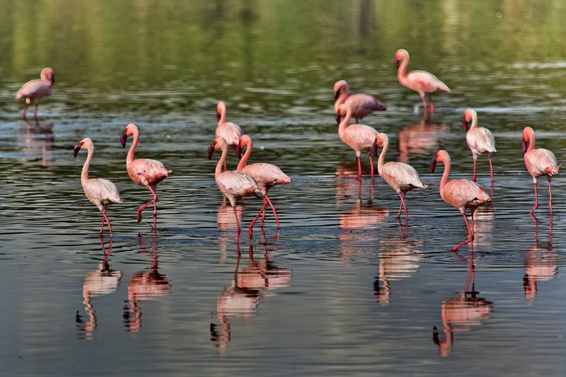 large_Flamingo__.._Ndutu_8-11.jpg