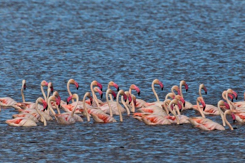 large_Flamingo__..e_Masek_8-2.jpg