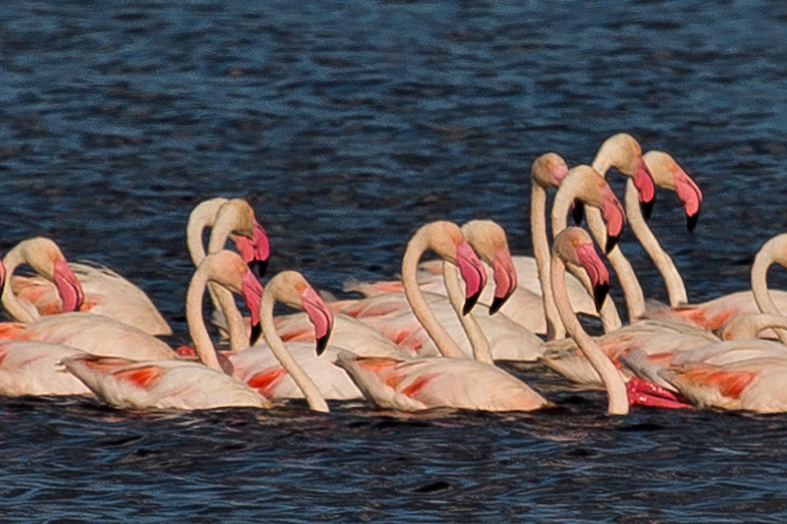 large_Flamingo__..e_Masek_8-3.jpg