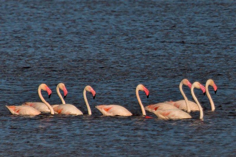 large_Flamingo__..e_Masek_8-5.jpg