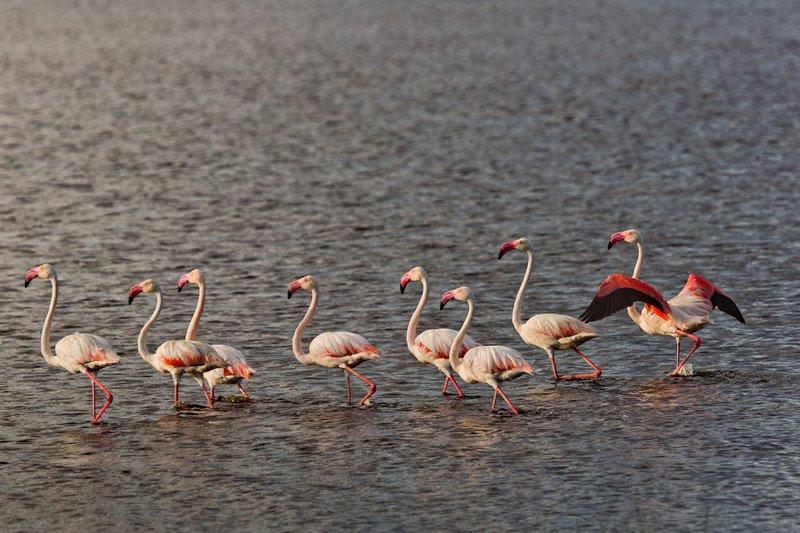 large_Flamingo__..e_Masek_8-9.jpg