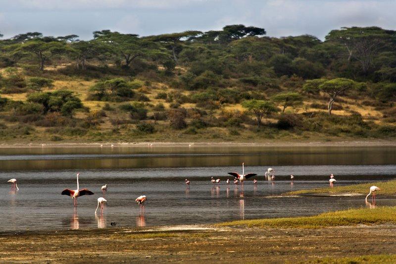 large_Flamingo__..e_Ndutu_8-7.jpg