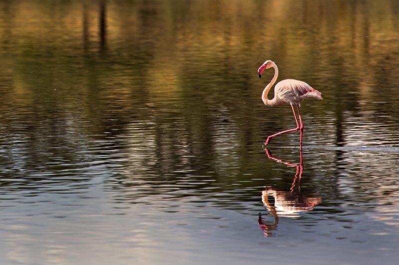 large_Flamingo__..e_Ndutu_8-8.jpg