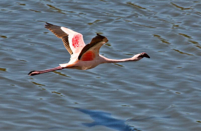 large_Flamingos_CF1.jpg