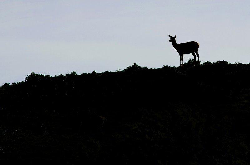 large_Giraffe_on_the_Hill.jpg