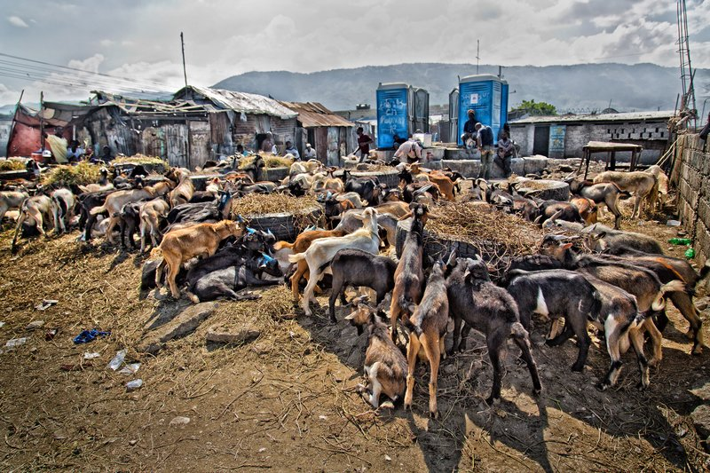large_Goat_and_Pig_Market_4.jpg