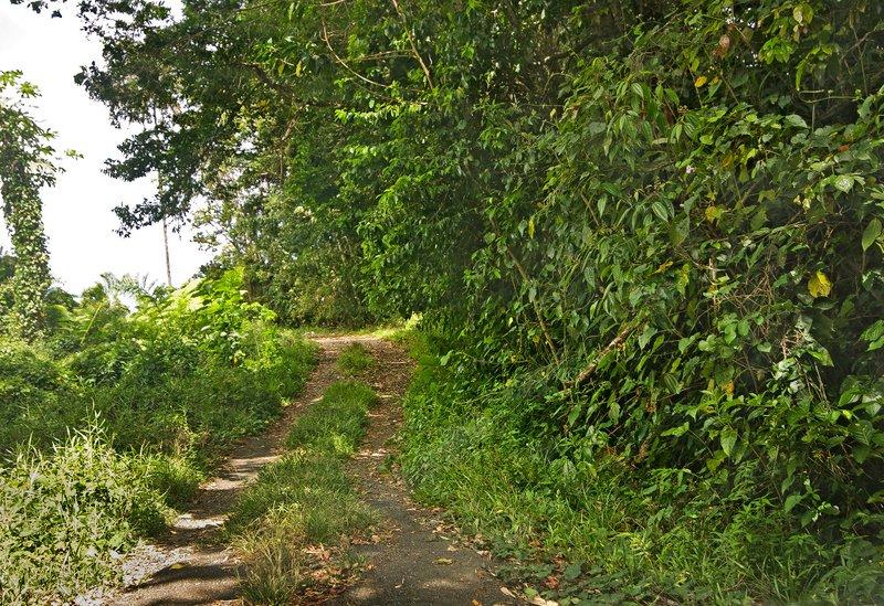 large_Grand_Bois_Forest_3.jpg