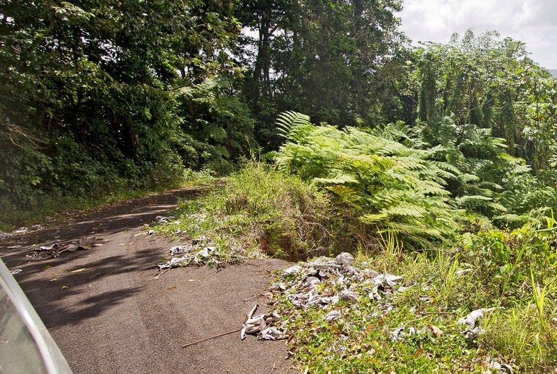 large_Grand_Bois_Forest_5.jpg