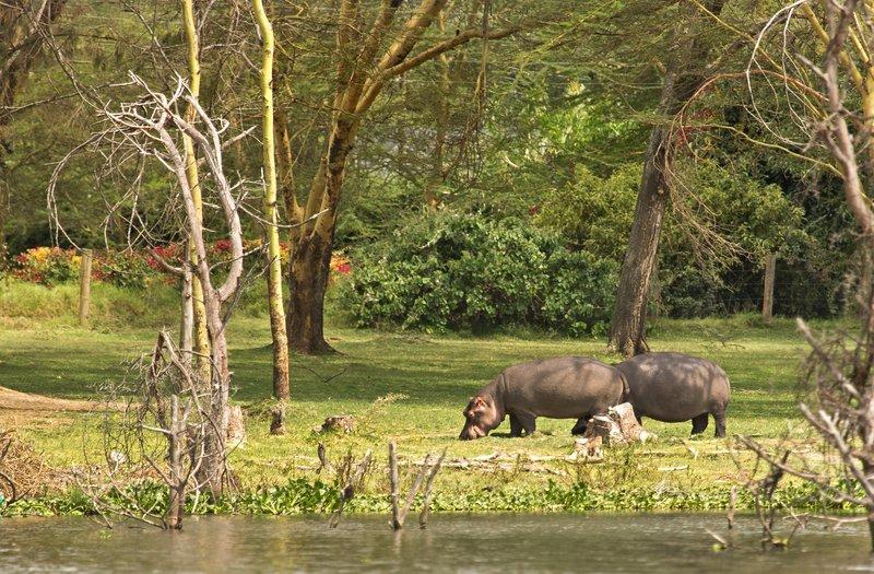 large_Hippo_8.jpg