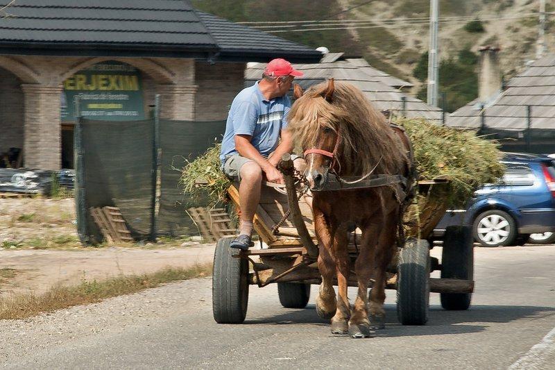 large_Horse_Darwn_Cart_5.jpg