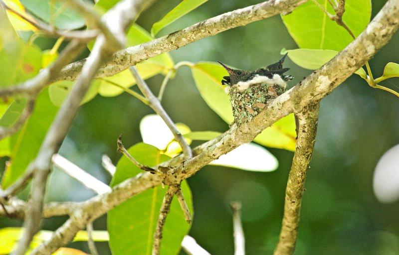 large_Hummingbird_Nest_6.jpg