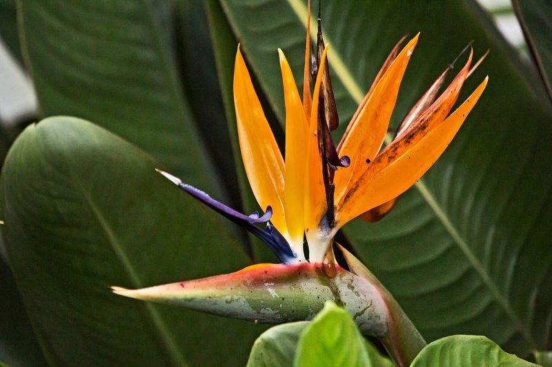 large_Karen_Blix..e_Gardens_8.jpg