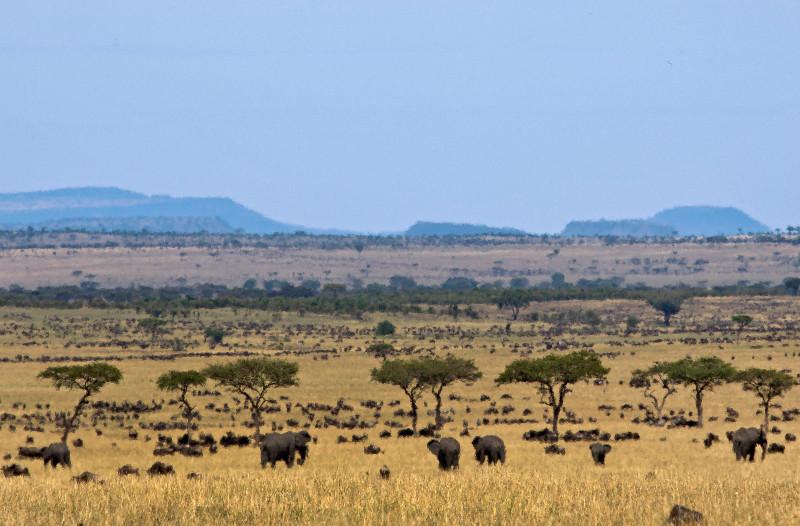 large_Kenyan_Elephants_1.jpg