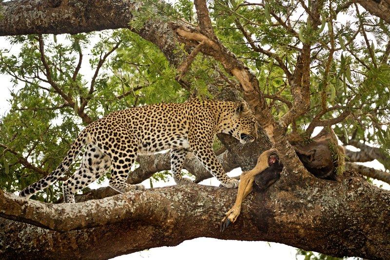 large_Leopard_61.jpg