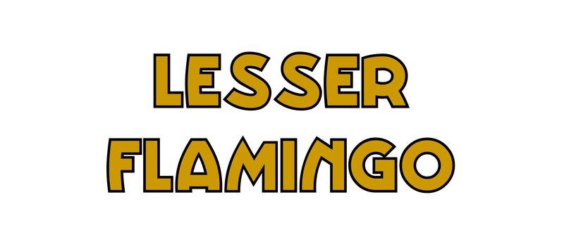 large_Lesser_Flamingo.jpg