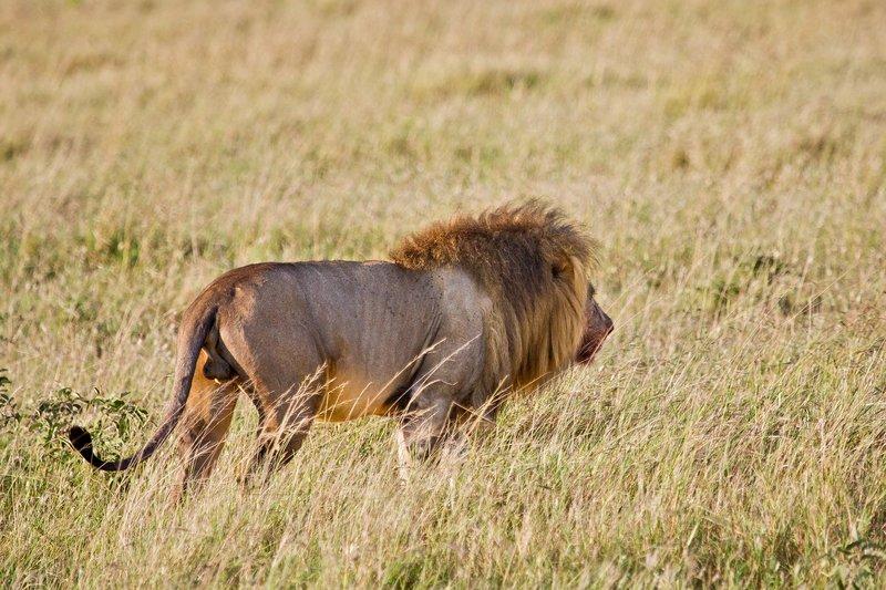large_Lions_10-111.jpg