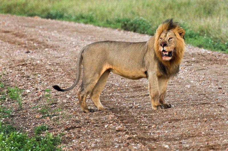 large_Lions_10-12.jpg