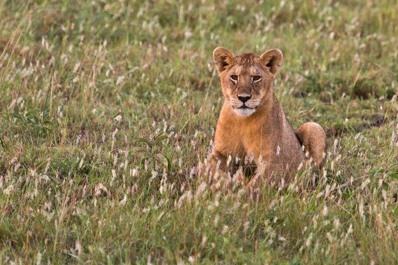 large_Lions_10-14.jpg