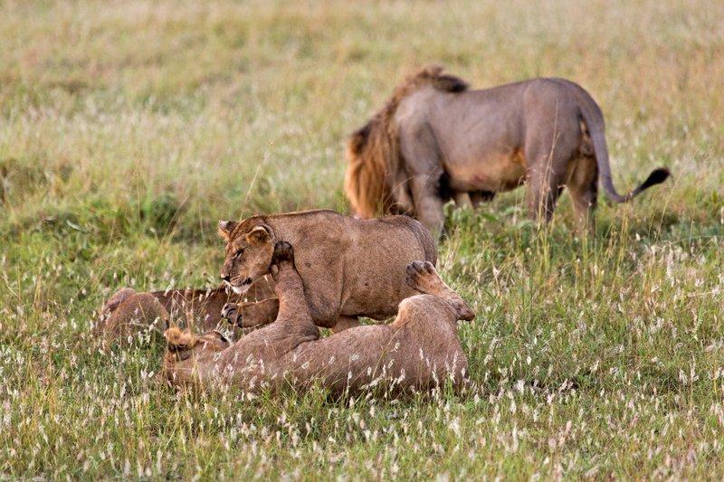 large_Lions_10-21.jpg