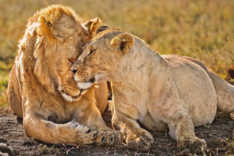 large_Lions_1109.jpg