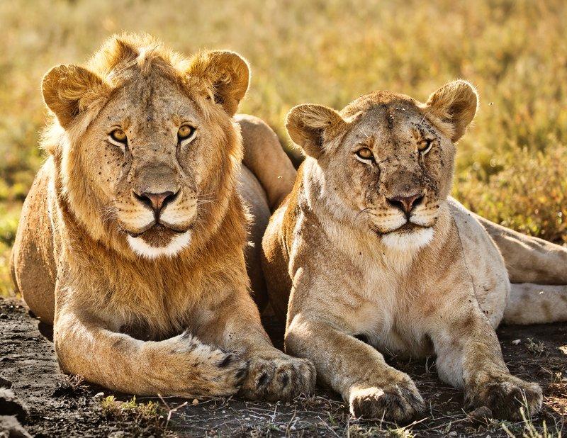 large_Lions_1113.jpg