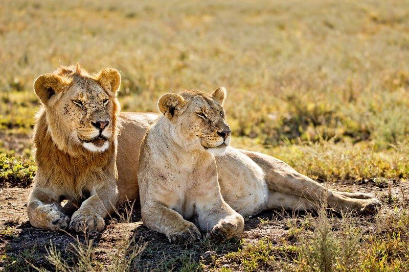 large_Lions_1122.jpg