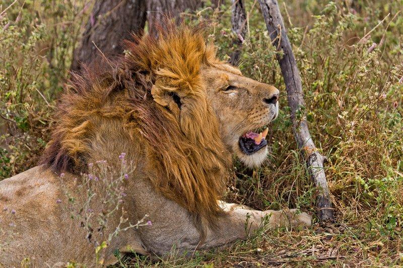large_Lions_8-62.jpg