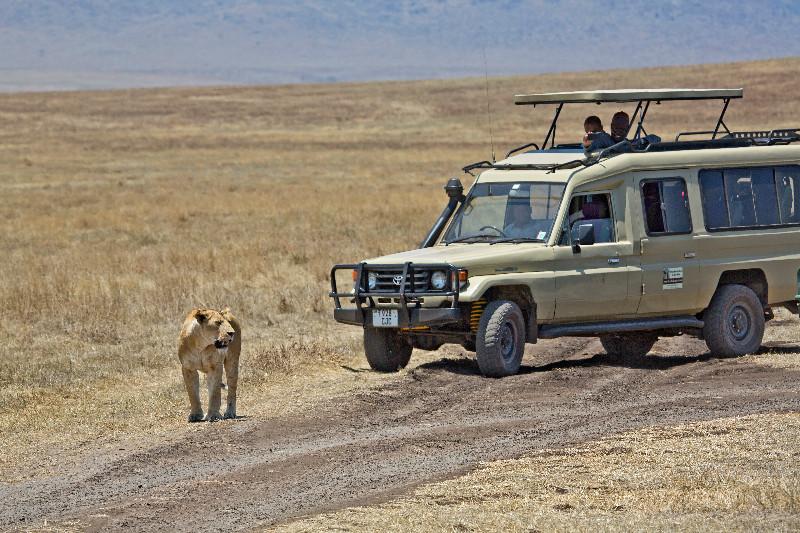 large_Lions_8.jpg