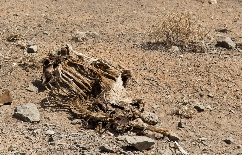 large_Livestock_Carcass_1.jpg