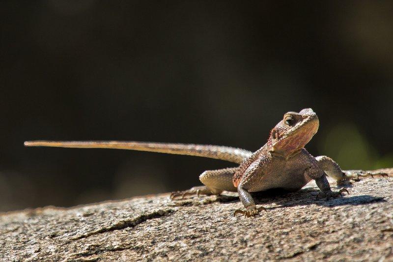large_Lizard_10-2.jpg