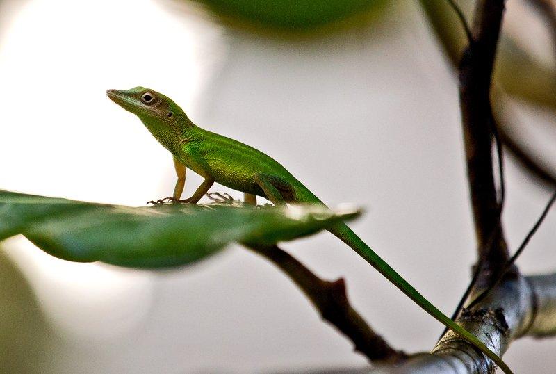 large_Lizard_52.jpg