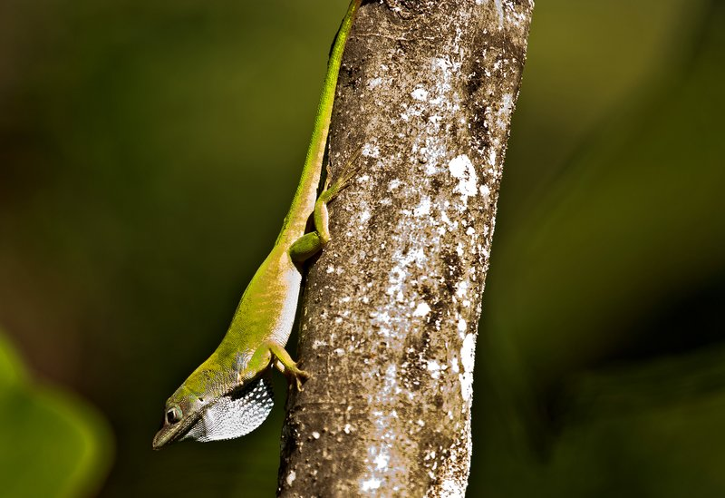 large_Lizard_56.jpg
