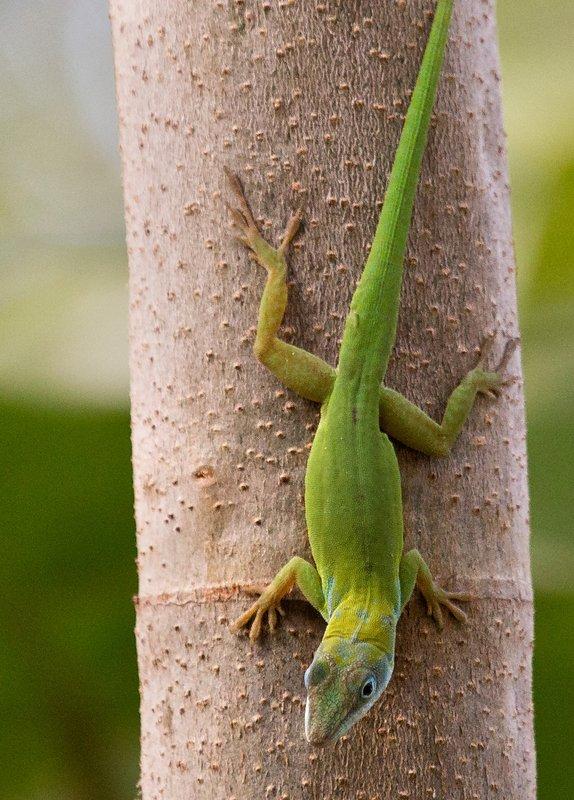 large_Lizard_61.jpg