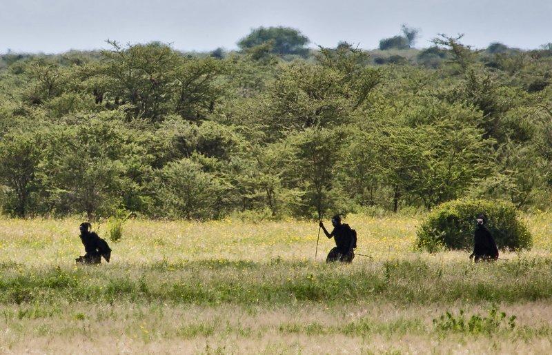 large_Maasai_Boy..cumcision_3.jpg